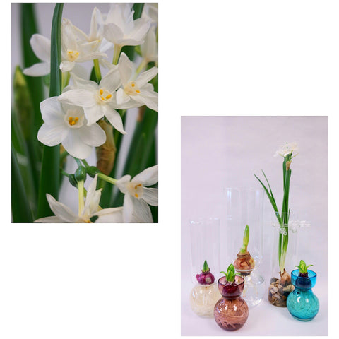 Forcing Bulbs in Vases with Water