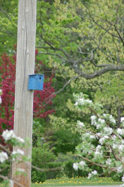 NESTING BOX - BLUE ORCHARD - Portico Indoor & Outdoor Living Inc.