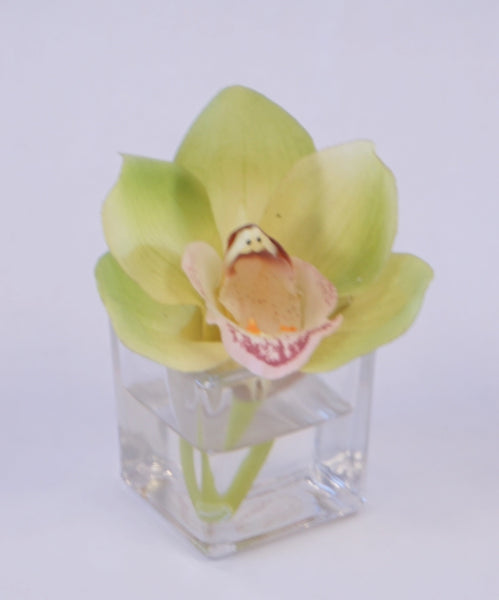 CYMBIDIUM ORCHID - GREEN - Portico Indoor & Outdoor Living Inc.