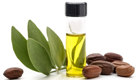 How jojoba oil is made? how jojoba oil is processed? laval