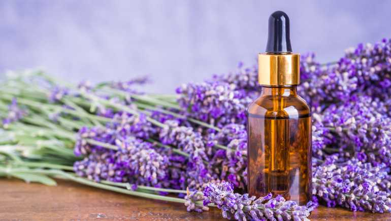 How Lavender oil is made? laval
