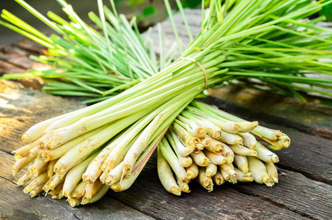 Lemongrass how it is made, how it is cultivated? laval