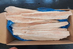 Pollock 170 - 200G Fillets  4.54KG FROZEN