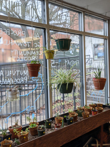 a series of plants hanging above a plant box in front of the windows of southpaw. the windows have some writing on them and drawings. it looks bright but overcast outside