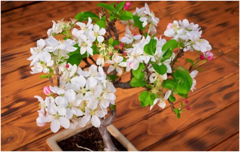 Bonsai Trees with Flowers