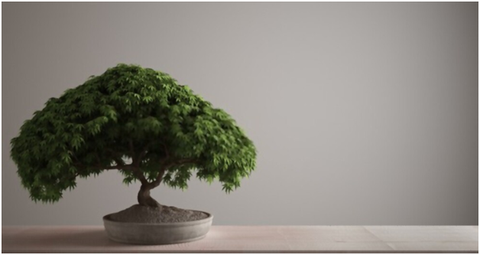 How to Make a Bonsai Tree from a Normal Tree