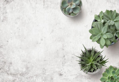 Are Succulents Good Indoors?