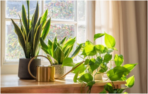 Tips for Growing & Caring of Air Purifying Indoor Plants