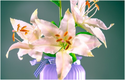 Indoor Oriental Lily Plant Care