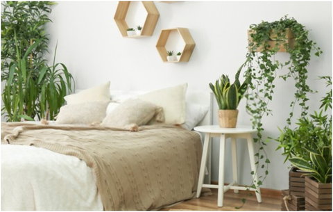 Plant Stand Ideas for Indoor
