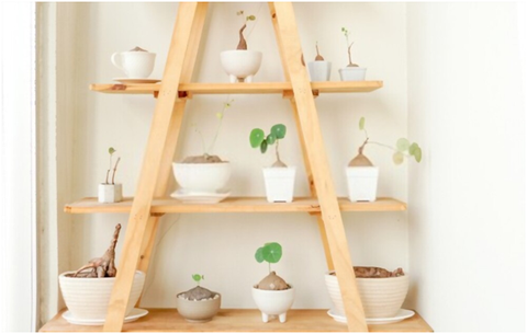 Multi-tiered Plant Stand