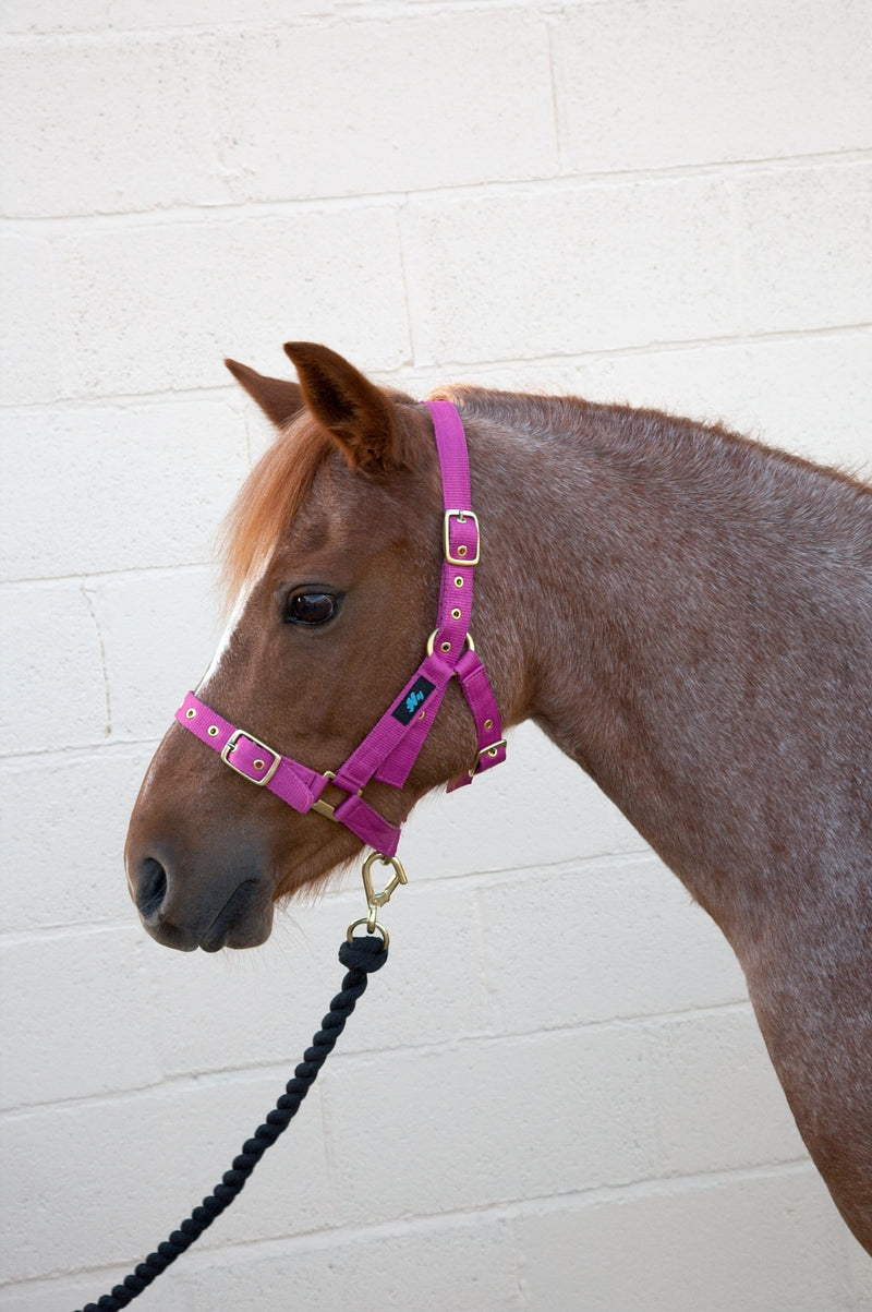 Hy Holly Fully Adjustable Headcollar