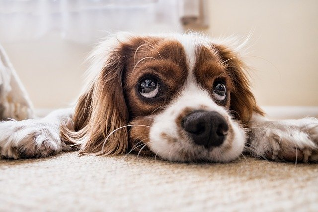 How to Care for Dogs Eyes