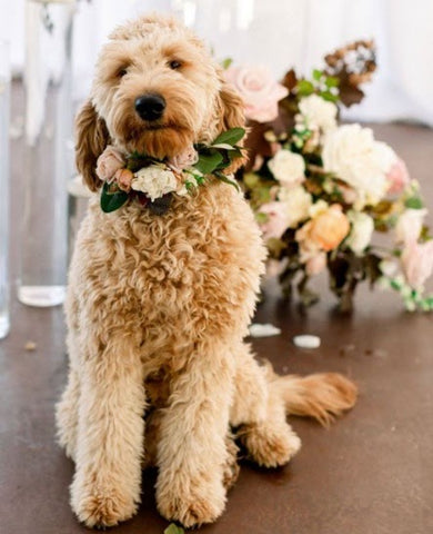 pet dog with flower collar and a flower bouquet in the background