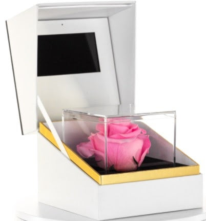 preserved pink rose encase in a glass box