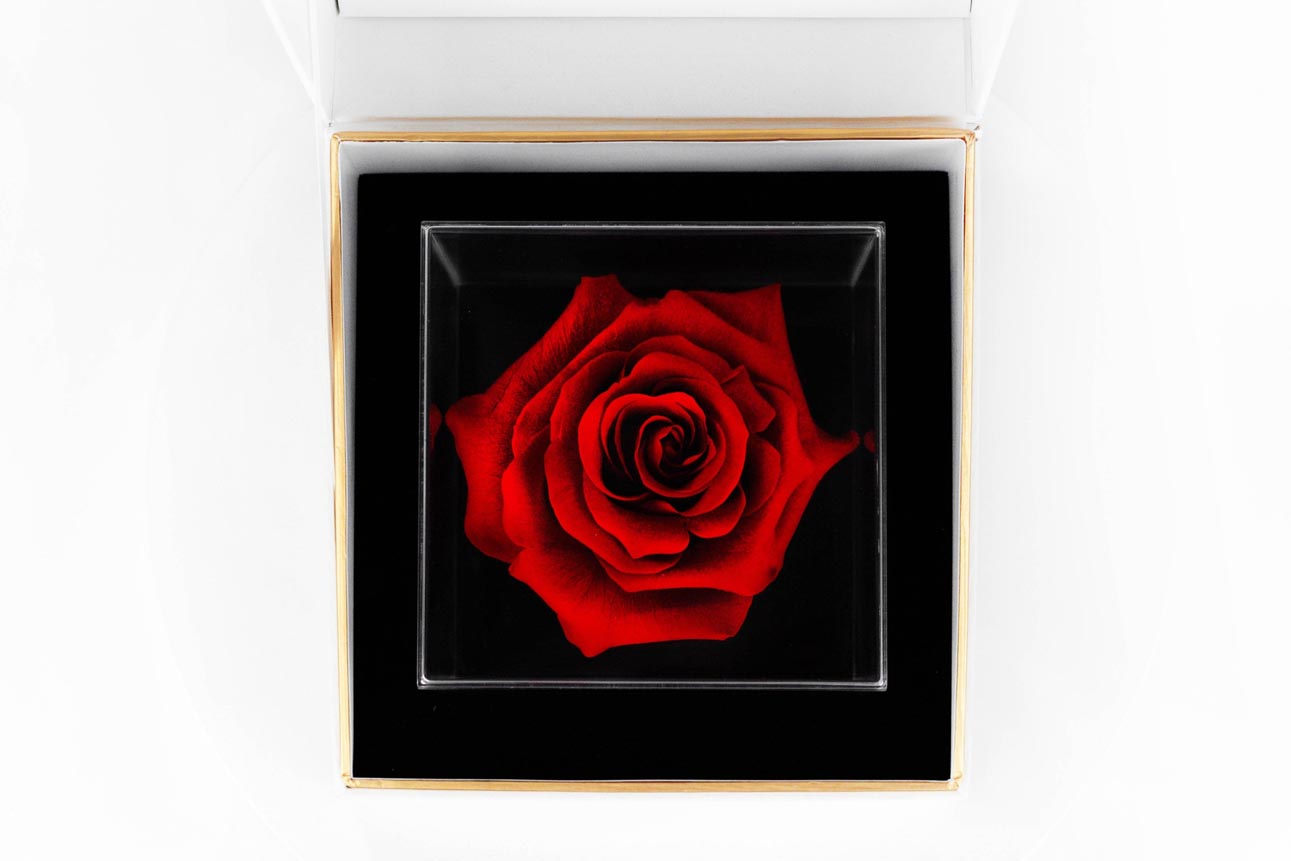 red rose - una grande collection-top view