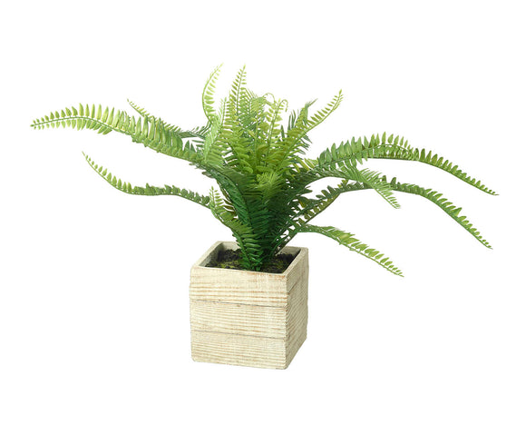 Potted Fern Green 34cm