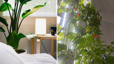 Light therapy with the Nutritower