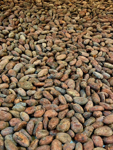 A photo of Cacao Pods