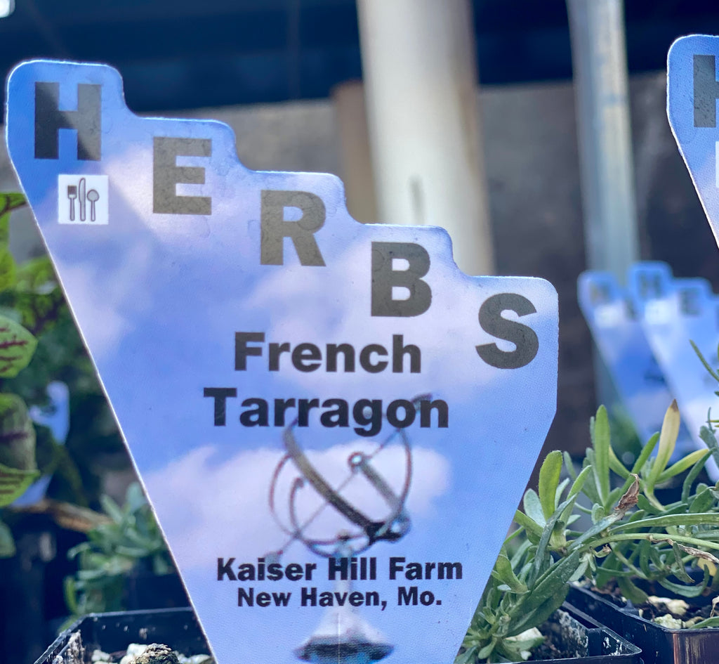 French Tarragon