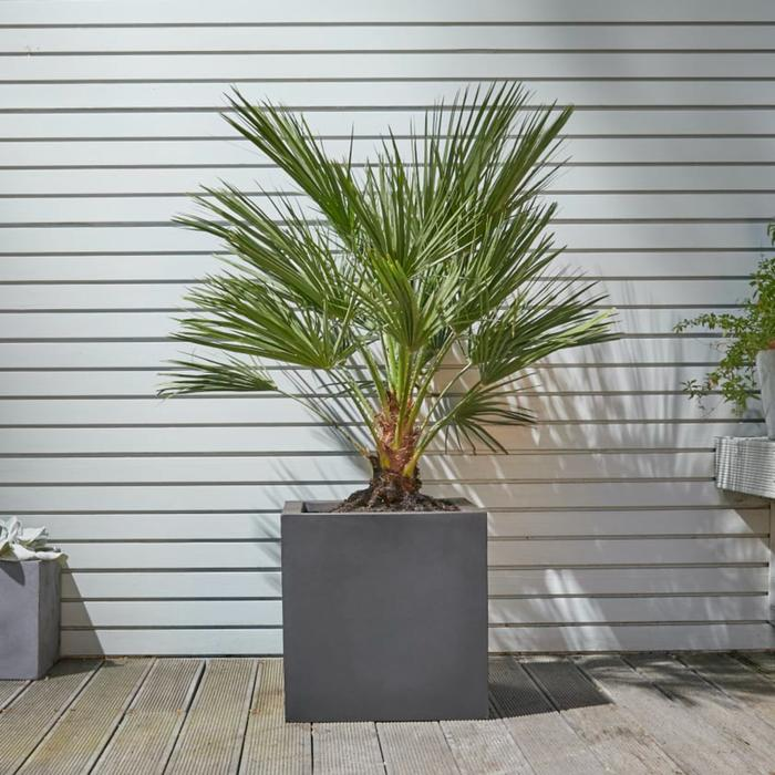 container palm