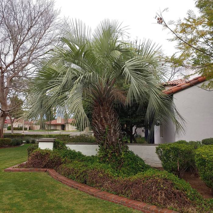 palm trees and landscaping