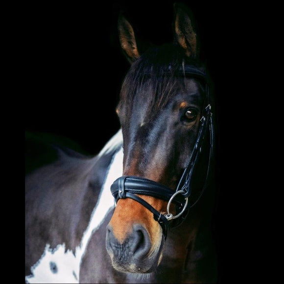 Ecorider Eventair Ecolux anatomical bridle