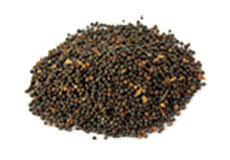 False Black Pepper