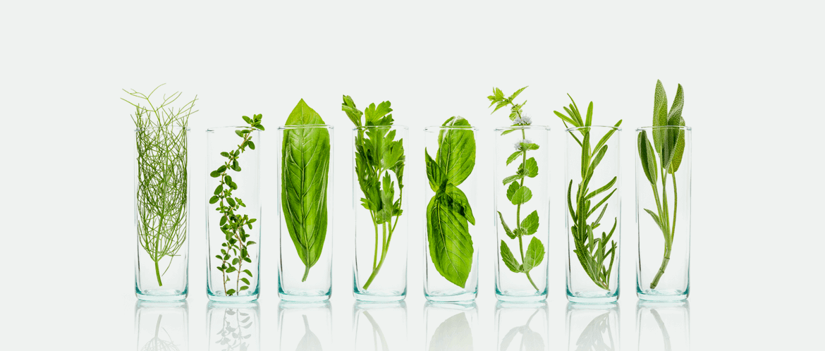 Herbs in glasses - Our Science - The Himalaya Drug Company