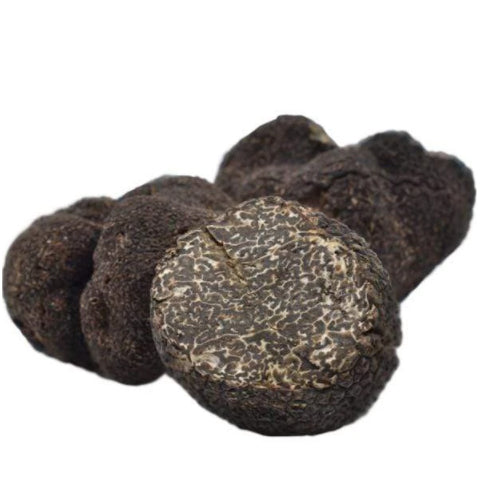 Why is the Perigord truffle so expensive? Truffle price and truffle season from Tuber melanosporum