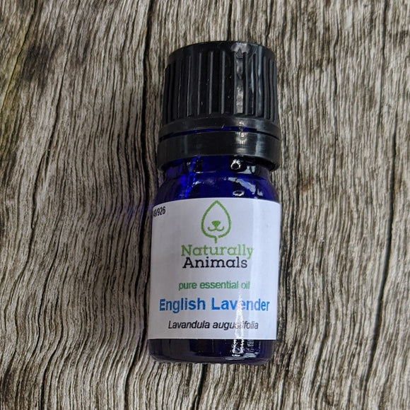 English Lavender Essential Oil 5ml