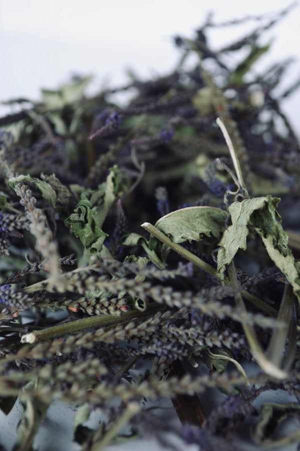 Dried Blue Vervain for sale