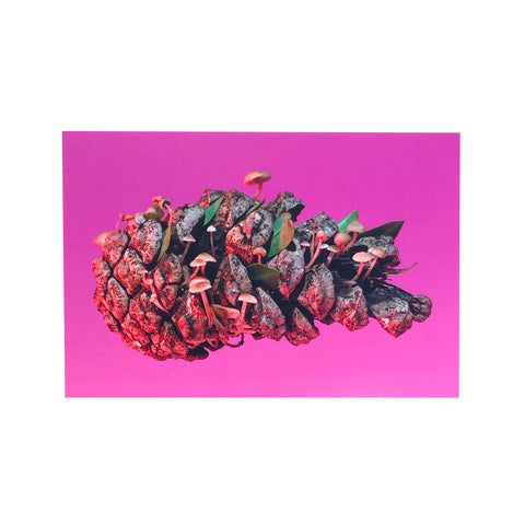 Pinecone Postcard