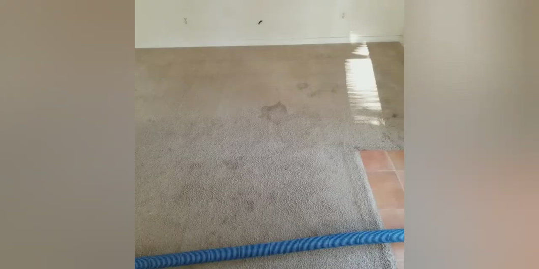 2 Room Carpet Cleaning Special (24 Hour Turn around).