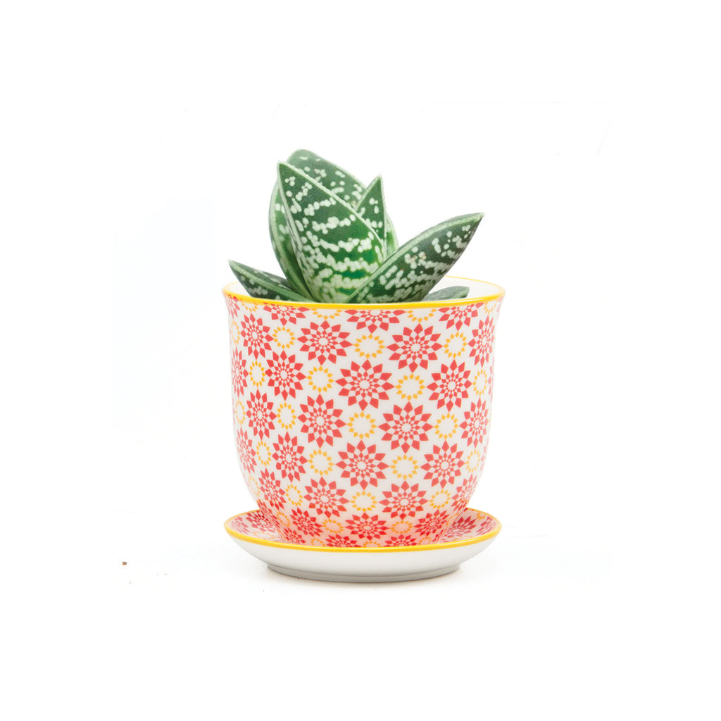 Liberte Plant Pot with Saucer - Red Stars