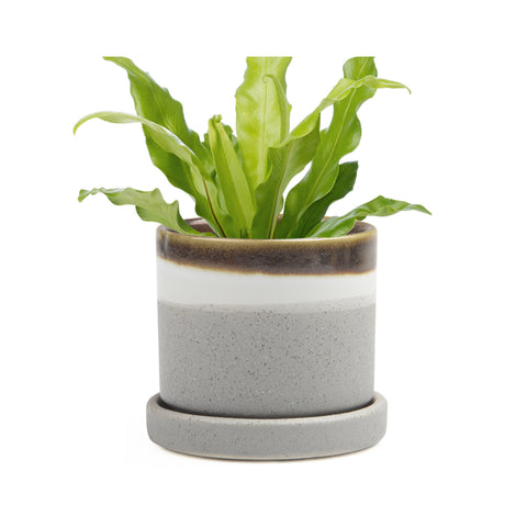 Big Minute Plant Pot with Saucer -Mocha Cement - in use