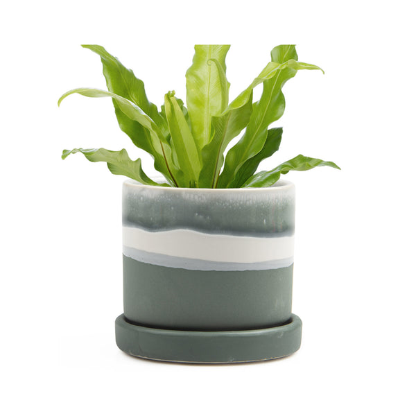 Big Minute Plant Pot with Saucer -Matte Green - in use