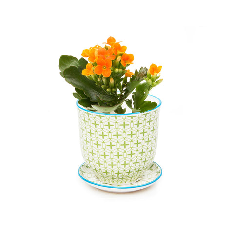 Liberte Plant Pot with Saucer - Green Plus