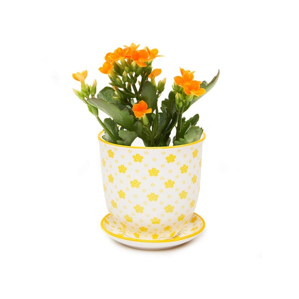 Liberte Plant Pot with Saucer - Yellow Stars