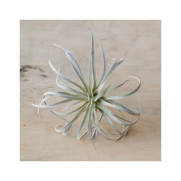 Faux Air Plant - Medium