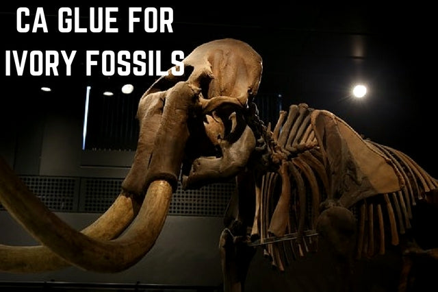 ivory fossils