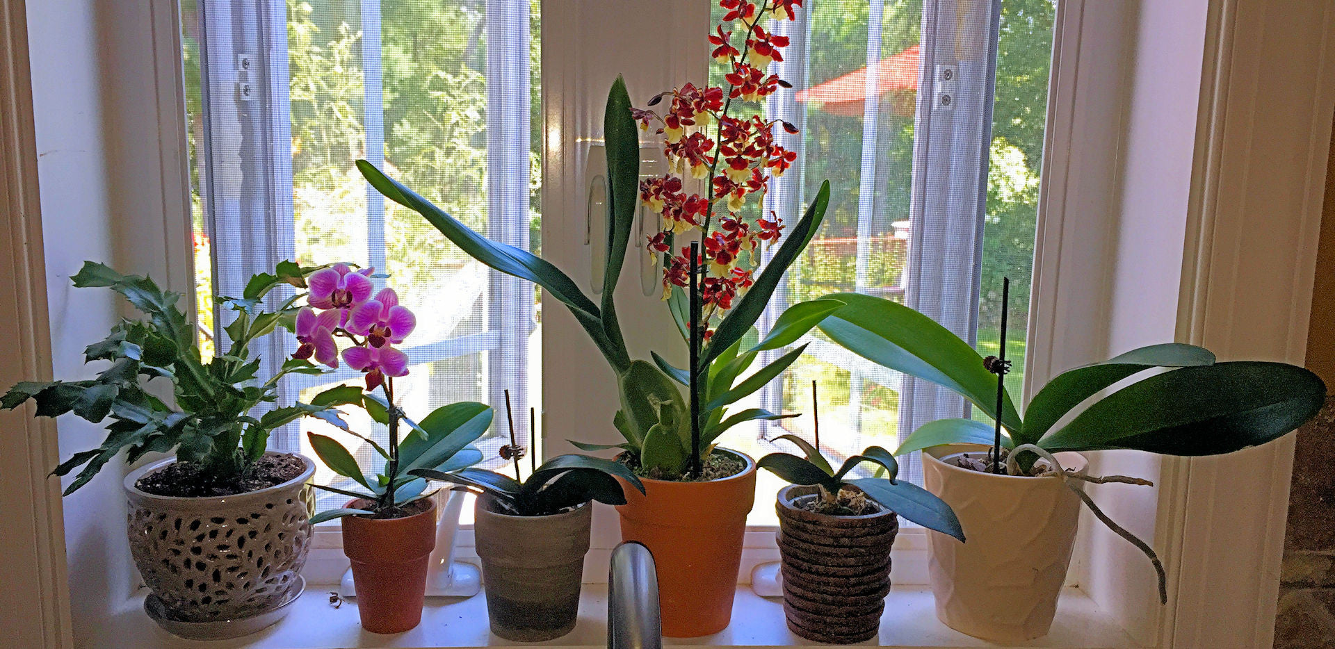 How To Care For Orchids A Comprehensive Organic Guide Earthworm