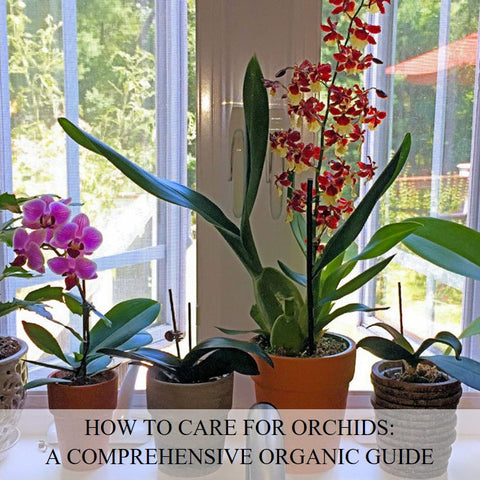 How to Care for Orchids: A Comprehensive Organic Guide