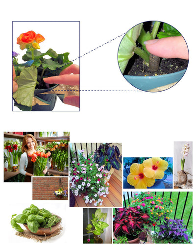 EarthPods® Organic Flower Fertilizer & Natural Plant Food Capsules Work On Everything