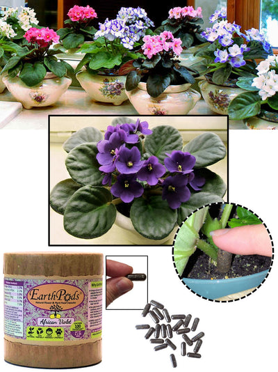 EarthPods® Indoor Organic African Violet Flower Fertilizer