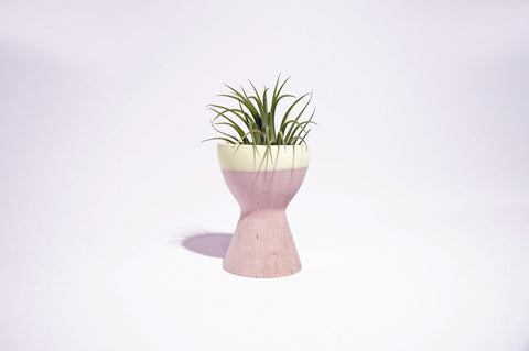 wooden air plant holder with yellow rim
