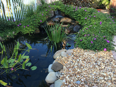 7 Things You Need Before Building a Pond