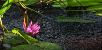 How to Pick the Best Aquatic Plants for Your Pond