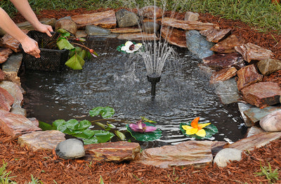 Choosing the Right Aquatic Plants for Your Backyard Pond