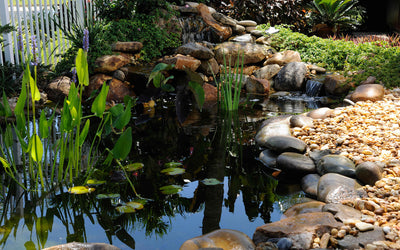 5 Tips for Your Pond in Spring